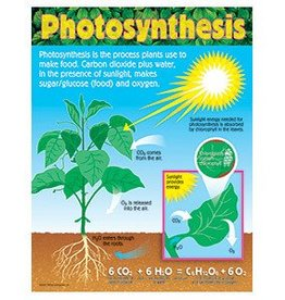 Trend Enterprises Photosynthesis T-38192