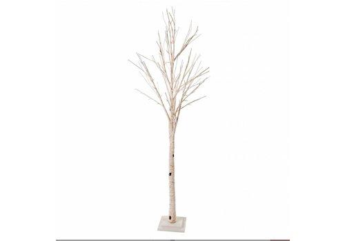 Illuminated Birch Tree L