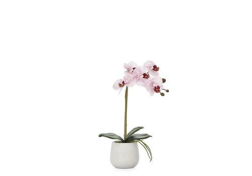 "Phalaenopsis Potted 15"" Single Stem Orchid - Pink"