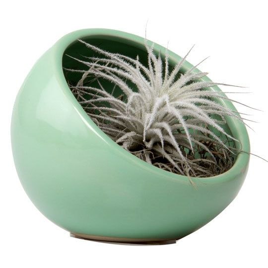 Half-Moon Vase, Chive
