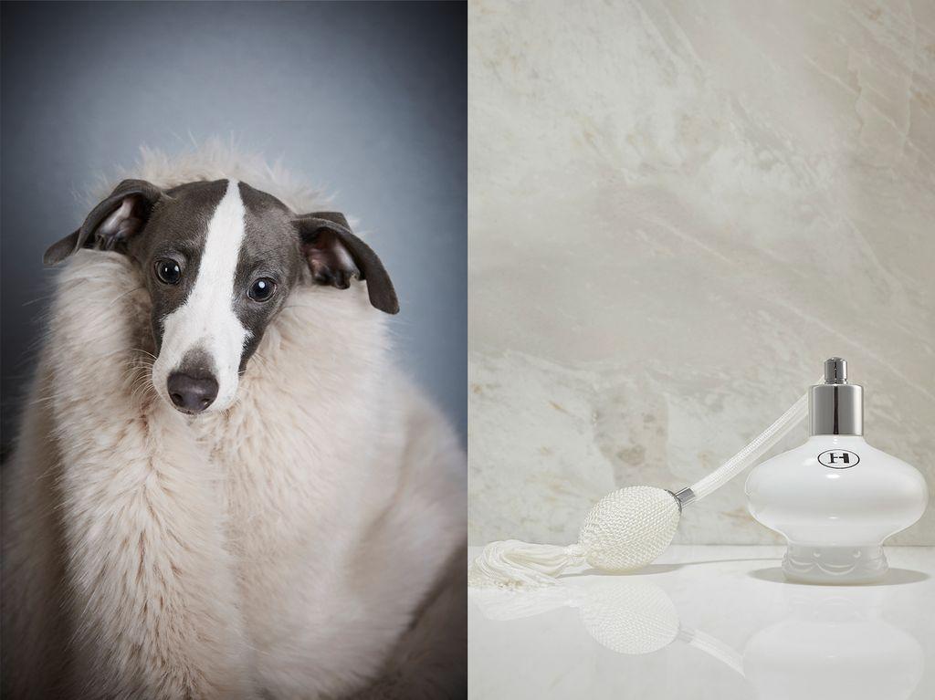 Harriott & Hound - White Pearl Paw Femme - Luxury Dog Cologne - 50ml