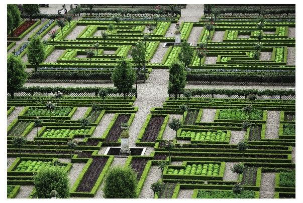 Felix Forest Photograph - Villandry (Gardens)