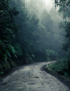 Felix Forest Photograph - VYR I -  VICTORIA