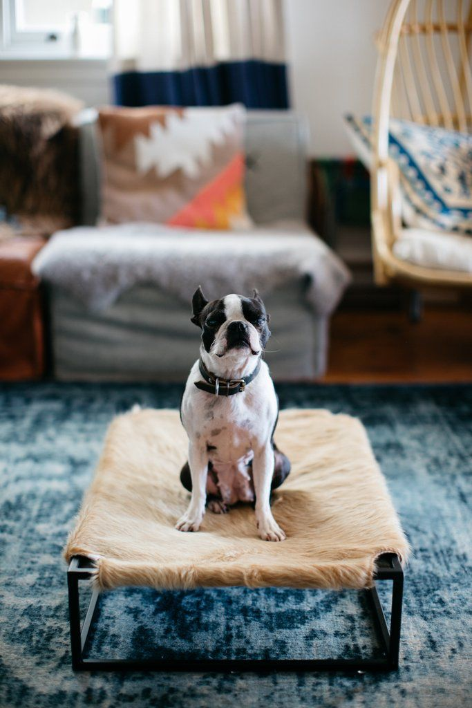 Angus Dog Bed by Arvin Grex - Tan Cowhide