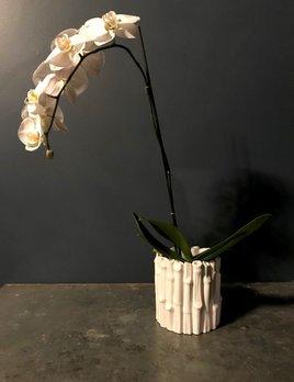 Home Round Bamboo Planter - Gloss White
