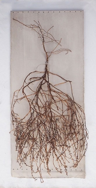 Thomas Bucich - Sea Specimen - Copper Plated Sea Plant on Painted Linen - 125x57cm - Australia