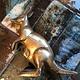 B.M.V.A. Vintage  Brass Kangaroo - H13cm c1970
