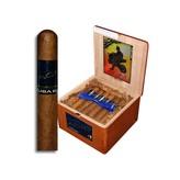ACID ACID Kuba Kuba Box of 24