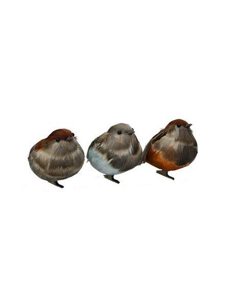 Pájaro Codorniz Clip