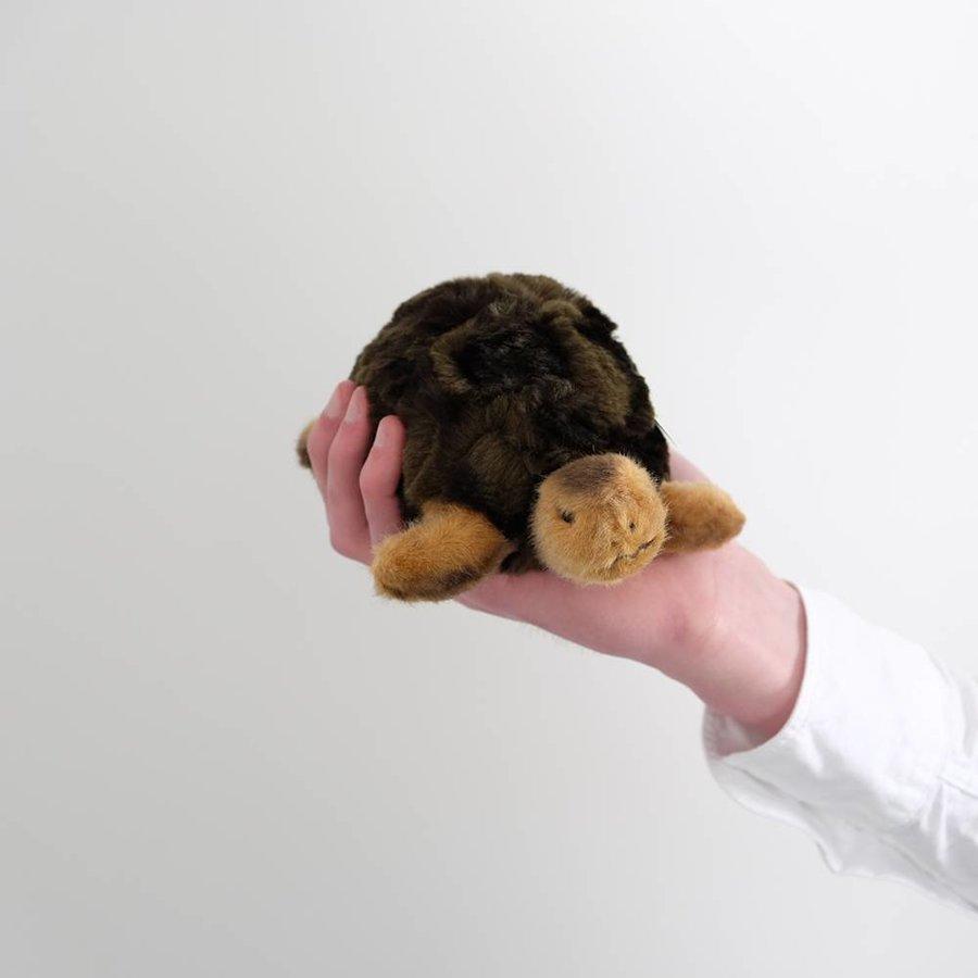 Slo the Turtle