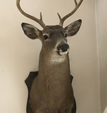 Vintage 1974 White Tail Deer