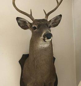 Vintage 1974 White Tail Deer
