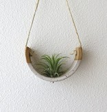 Muddpupy Mudpuppy Hanging Planter