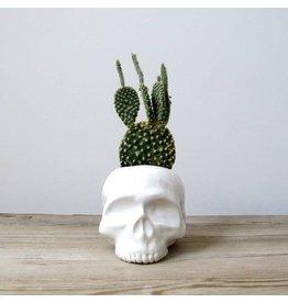 Muddpuppy Mudpuppy Skull Planter