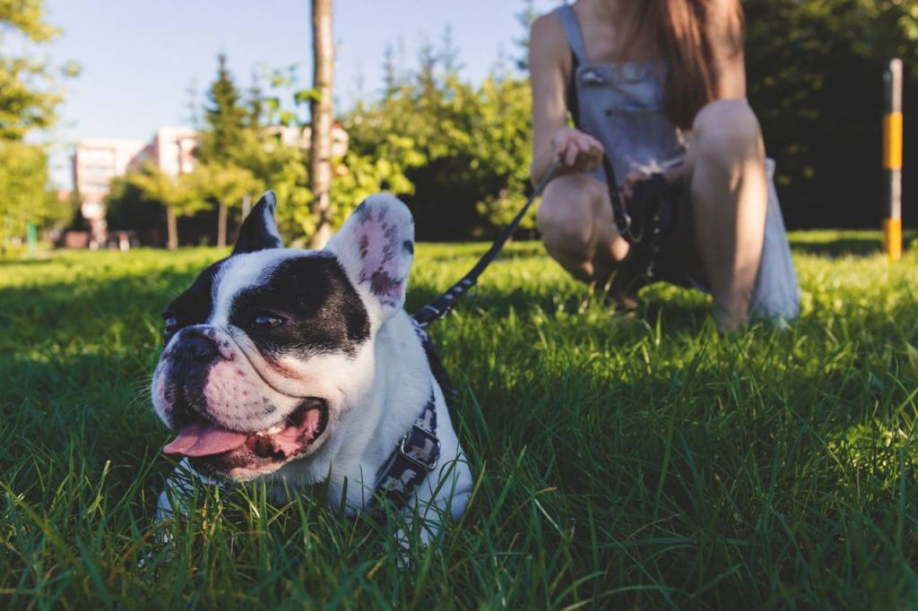 The Do's and Don'ts of Taking Your Furry Friend to Dog Parks