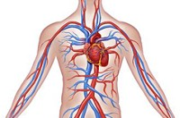 Vitamin C and the correct labeling of cardiovascular disease as a form of chronic scurvy.