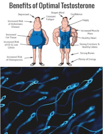 URGENT! Men and the Decline of Testosterone and Sperm