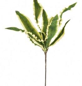 Botanica #781