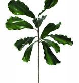 Botanica #795