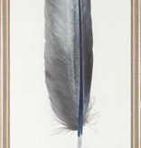 STERLING FEATHER 1