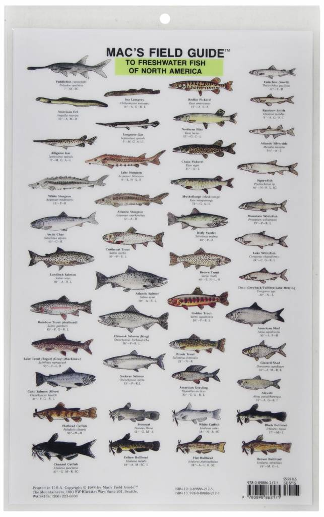 Freshwater fish of north america macs field guide pilothouse freshwater fish of north america macs field guide sciox Images