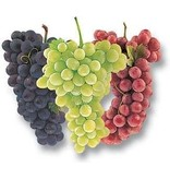 Italian Pinot Grigio 6 Gal. Juice