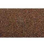 Blackswaen Black Barley Malt 55 LB (500L)