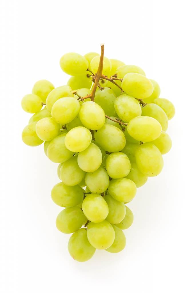 Regina California Pinot Grigio 5.3 Gal. Juice