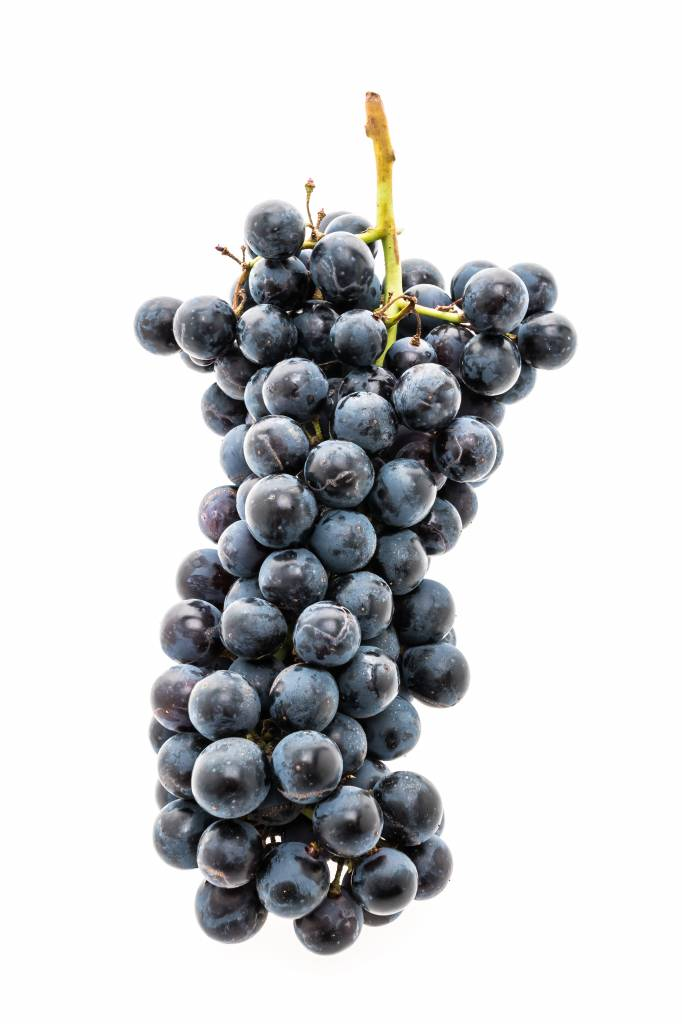 Regina California Pinot Noir 5.3 Gal. Juice (Red)