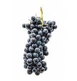 Regina California Nebbiola 5.3 Gal. Juice (Red)
