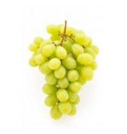 2018 Italian Pinot Bianco 6 Gal. Juice (White)
