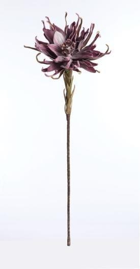 Antastasia Dk. Purple