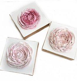 6x6 English Rose