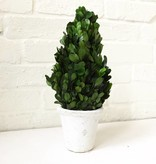 Boxwood Topiary-Small