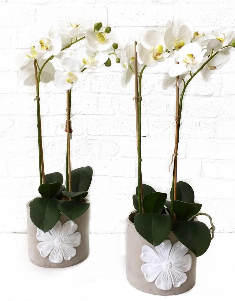 "23"" Potted Phalaenopsis"