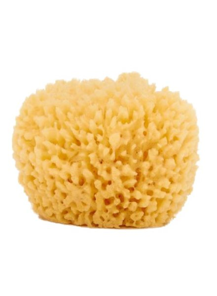 Baudelaire Natural Sea Sponge 4.5in