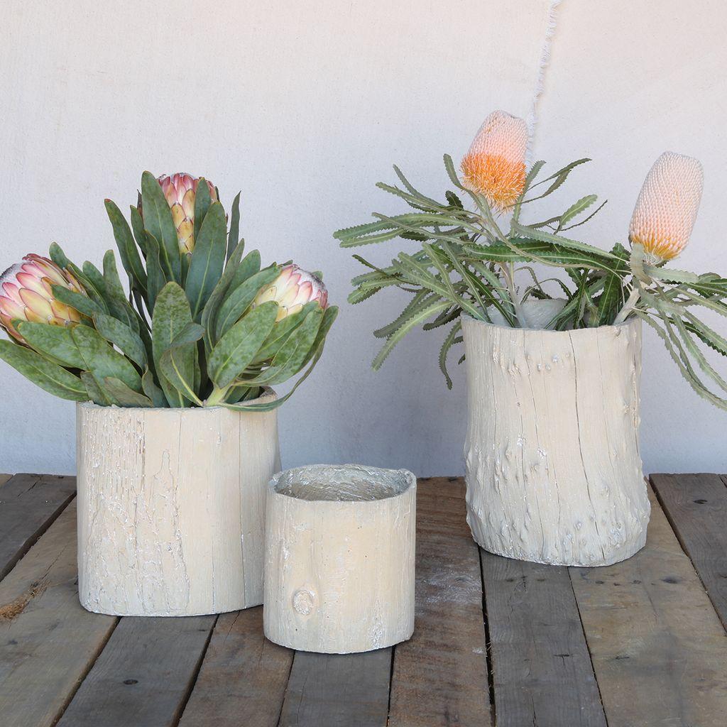 HomArt Eucalyptus Cast Cement Container - Lrg
