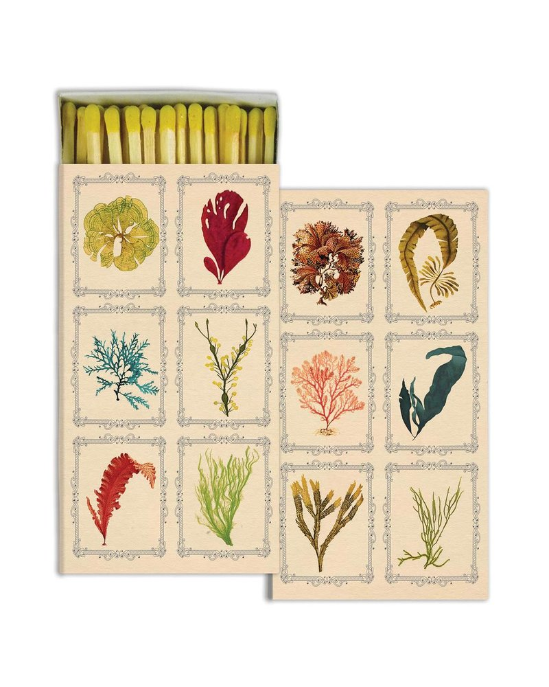 HomArt Kelp - Matches Set of 3 Boxes