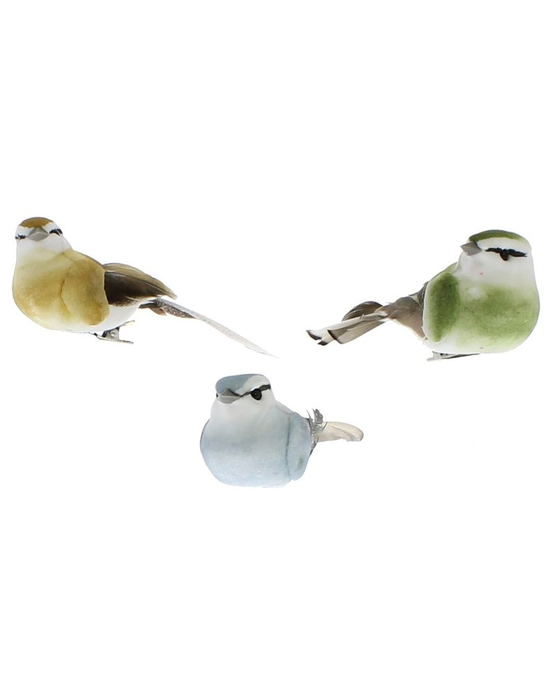 HomArt Colorful Canaries - Box of 3