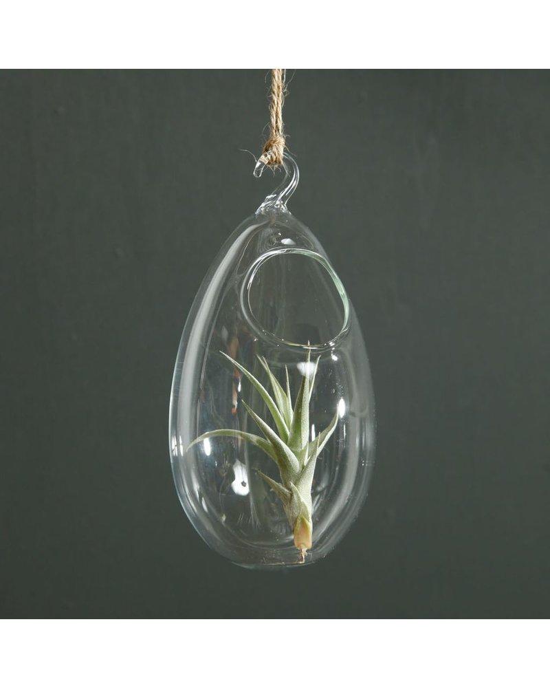HomArt Hanging Bubble Terrarium - Oval - Clear