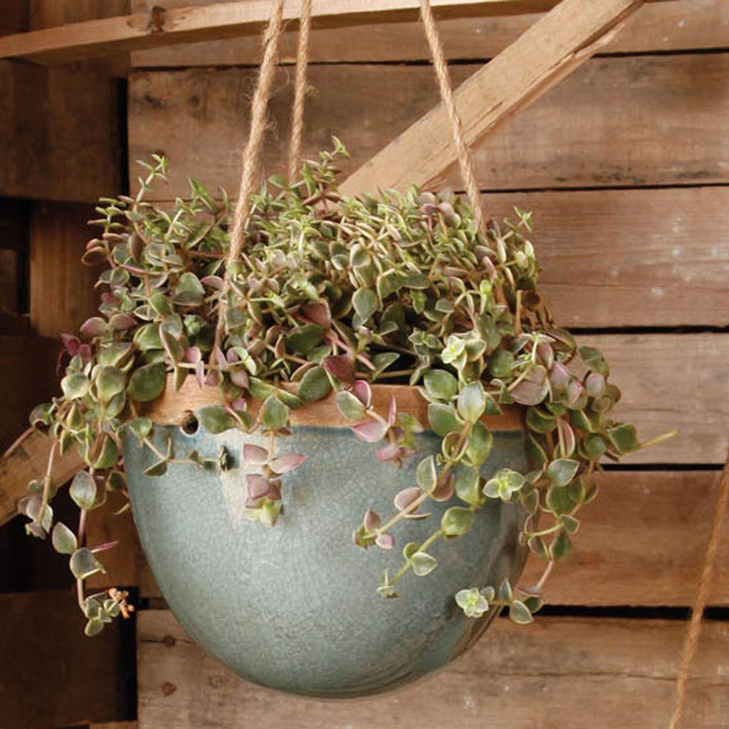 HomArt Mulberry Hanging Planter - Sm - Teal