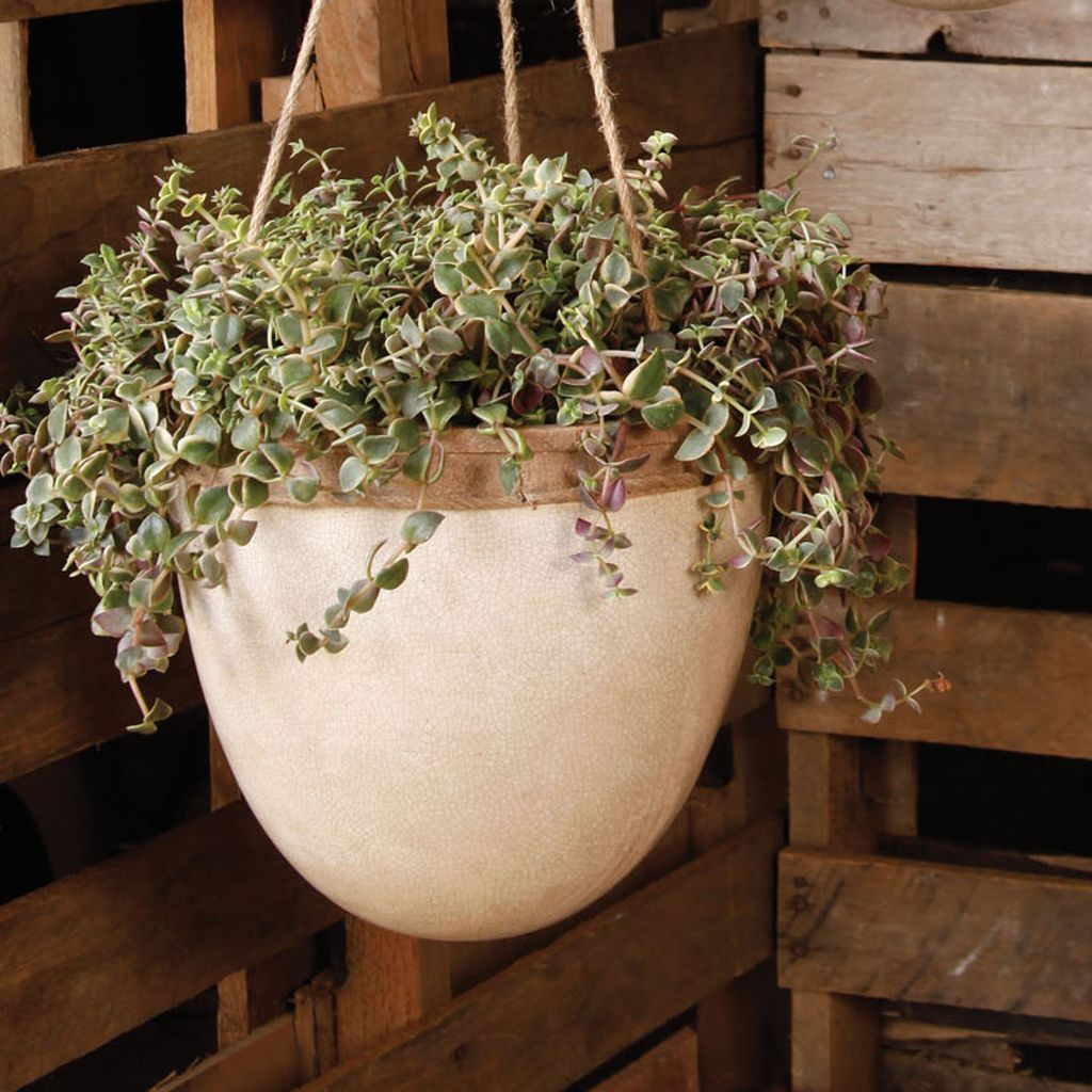 HomArt Mulberry Hanging Planter - Lrg - White