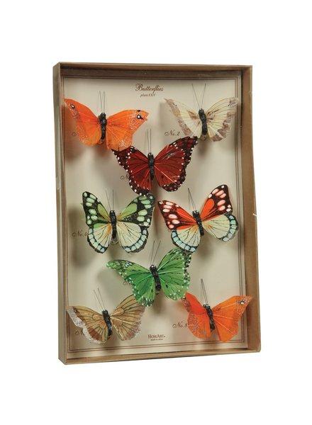 HomArt Butterfly Specimen Box - Multicolor