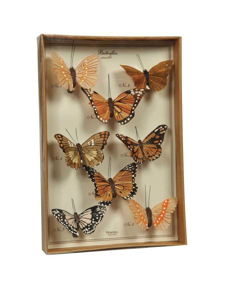 HomArt Butterfly Specimen Box - Brown
