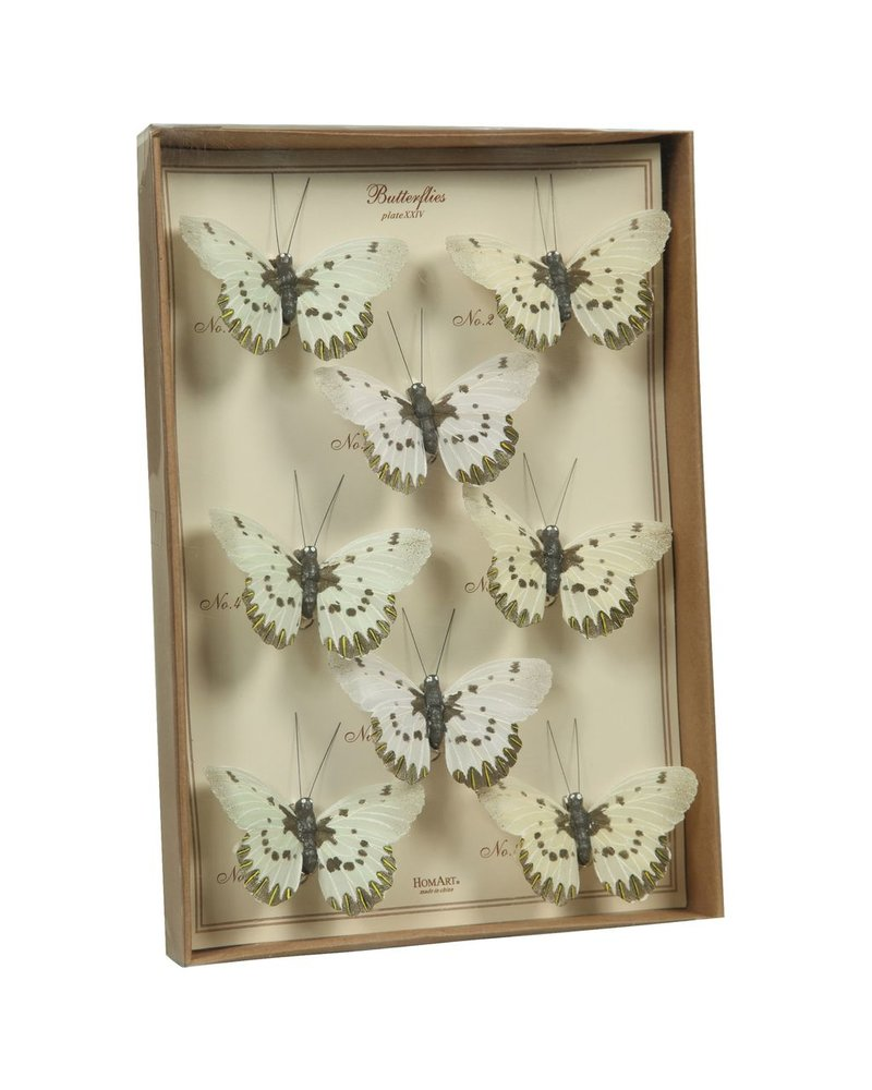 HomArt Butterfly Specimen Box - White-Brown