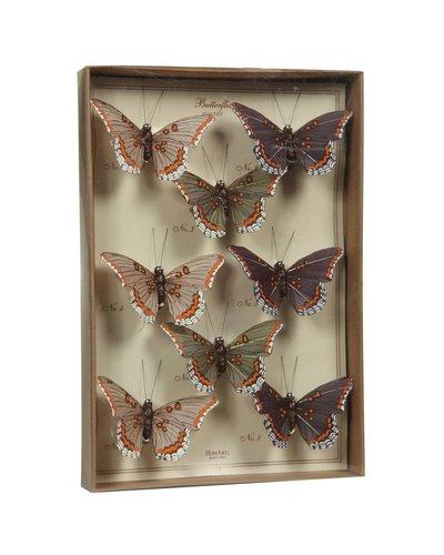 HomArt Butterfly Specimen Box - Purple-Green