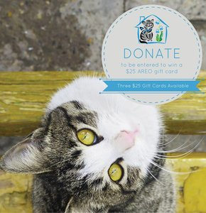 OCTOBER 28 12-3PM Bluebell Cat Foundation
