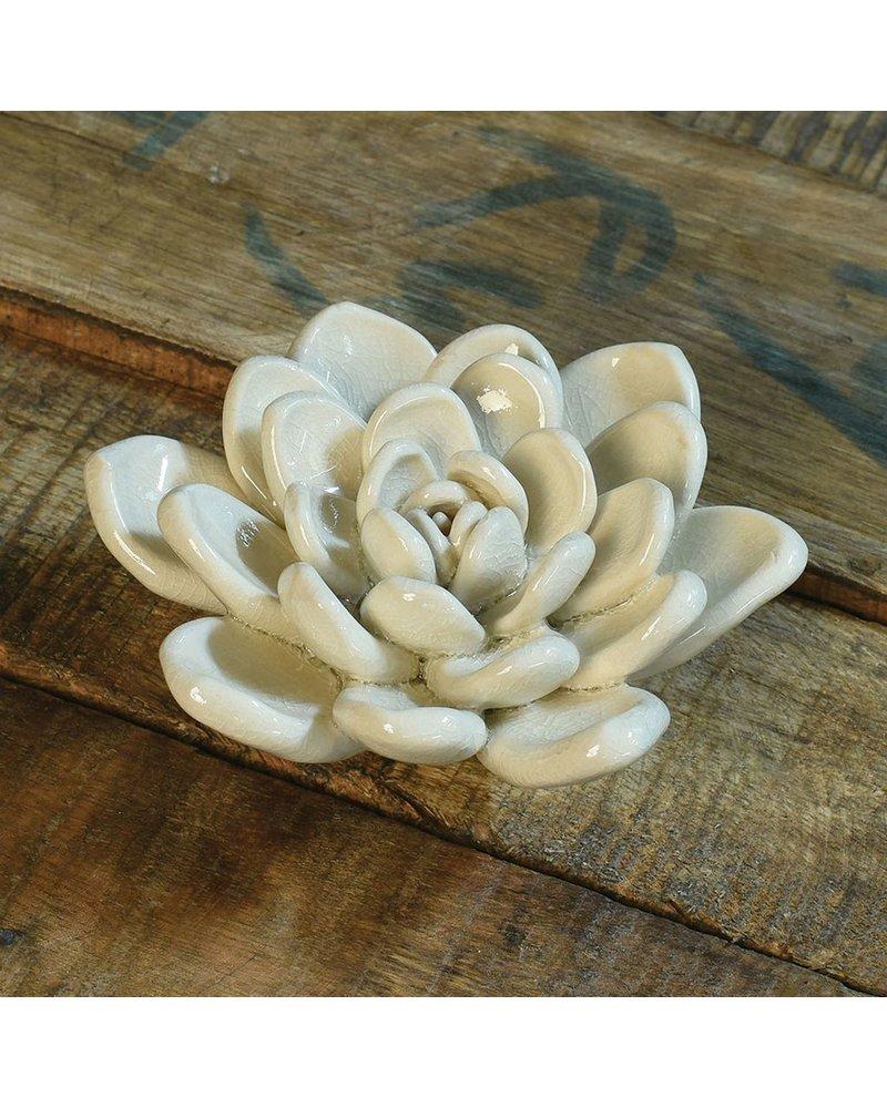 HomArt Ceramic Succulent - Cream