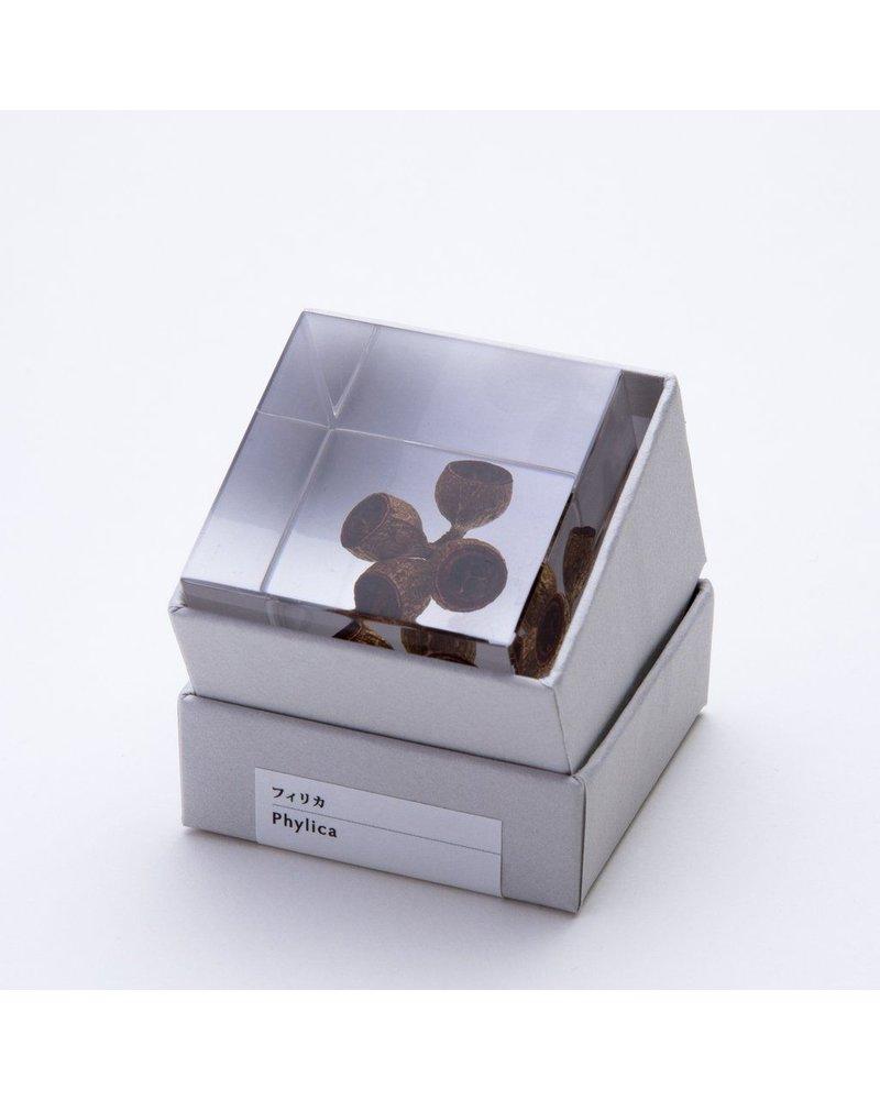 """Sola Cube Eucalyptus Acrylic Cube 1.6"""""""