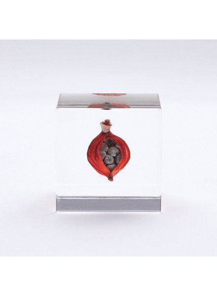 "Sola Cube Shell Ginger Acrylic Cube 1.6"""